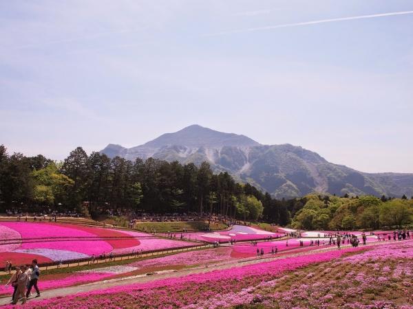 「芝桜の丘」が有名な羊山公園(秩父)