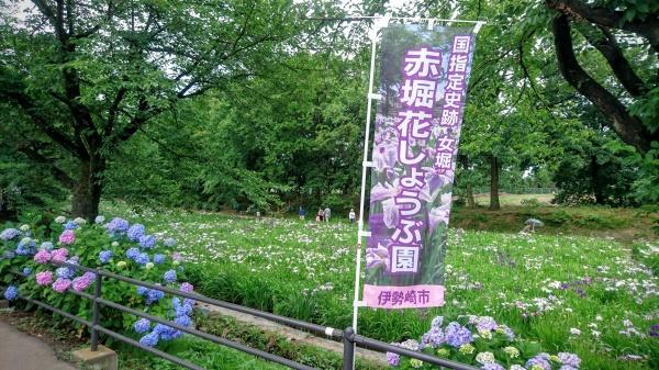 伊勢崎の「赤堀花しょうぶ園」