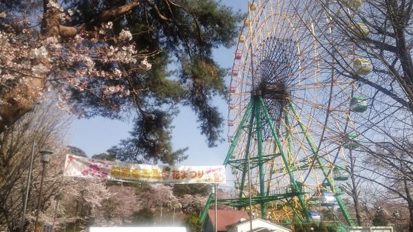 桜とツツジの名所・伊勢崎の華蔵寺公園と遊園地