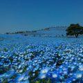 国営ひたち海浜公園(茨城県)
